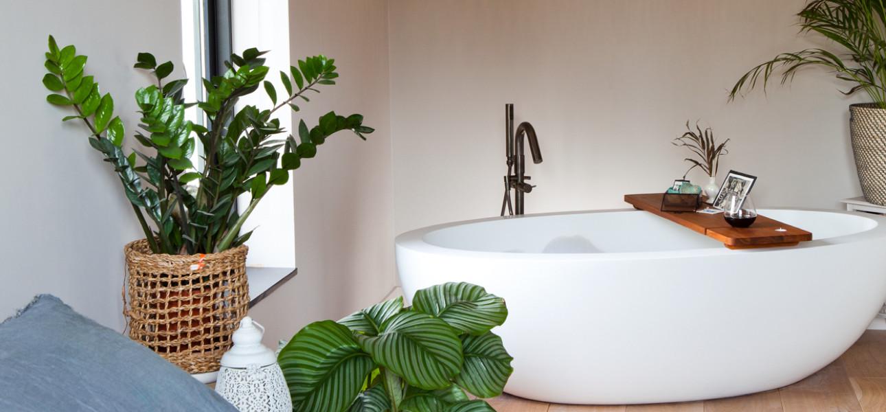 Welke planten overleven in je badkamer?